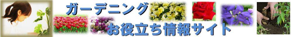 初心者がガーデニングで特に育てやすい植物でオススメは? | ガーデニング初心者でも簡単!オススメの始め方〜花の育て方情報!