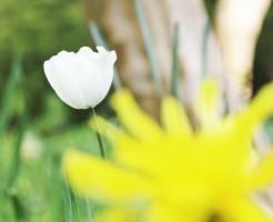 草花の植え方 植え替え時期 オススメ 深植え 浅植え