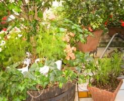 ガーデニング 肥料 時期 与えるタイミング