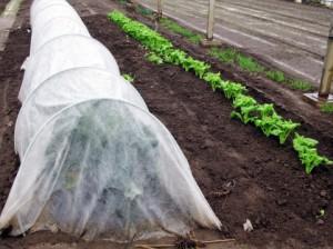 肥料の種類 有機質 無機質 速効性 遅効性