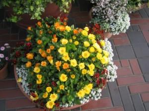 場所別,土作り,特徴,花壇,庭,植木鉢,プランター,初心者,オススメ