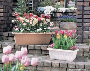 花壇・プランターの種まき方法