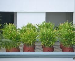 用土の配合比 置き場所 植物 用途別