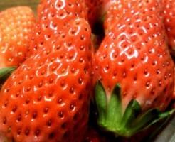 イチゴ 苗 作り方